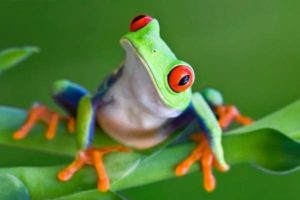 amphibian3