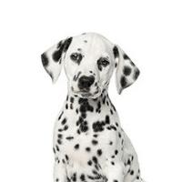 ParqEx Spot Mascot