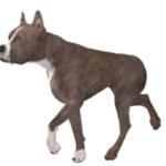 For Dog People, A Big Loyal Dog